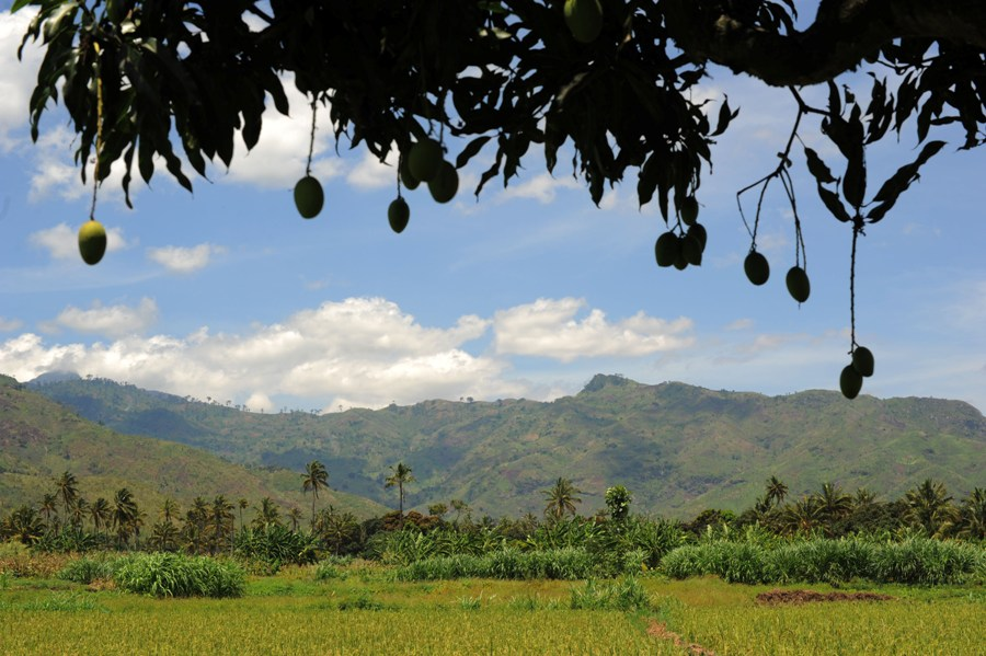 Rice paddies in Kiroka with the Uluguru Mountains in the distance